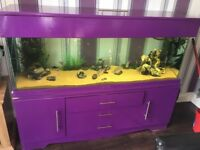 5 foot fish tank for sale