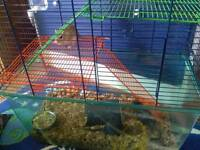Three male gerbils and cage
