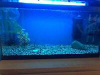 Fish tank 95 litre