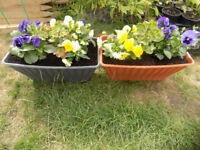 NEW Garden Large Planters with mixed flowers
