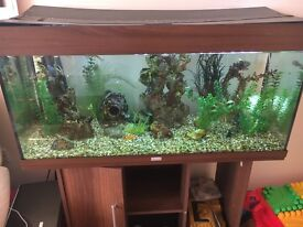 Juwel fish tank with cabinet and accessories