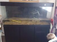 5ft curved edge fish tank
