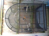 parrot cadge