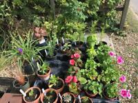Plants for sale - cacti, succulents, herbs, perrennials