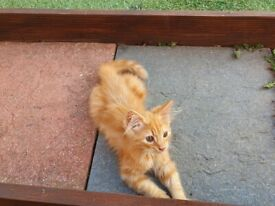 12 Week Old Stunning Kittens