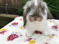 4 Adorable Baby Boy Rabbits
