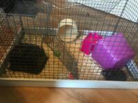 Female Syrian hamster and lazy bone cage
