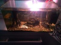 65 litre fish tank with everything you need including fish