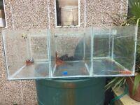 Fish Breeding Tank. 90x60x35cm built in filtration system & media, foam, pumps, 3 sections 200L