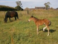 Horses, Equestrian, Stable to Rent, Livery, West Lothian, North Lanarkshire, Shotts