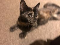 Pretty Little Kitten   comes with litter tray, food, toys and more!