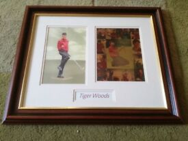 Tiger Woods print