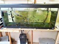 3 Fish Tanks, 3 Fluval 305 filters, fish, box of bits too much to mention plus food