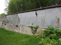 """Greenhouse glass job lot 10+ panes 56""""x 28"""" FREE for REMOVAL"""