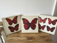 Three Butterfly Canvas Prints