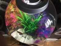 60ltr biorb with lots of extras fish heaters additives tanks fish aquariums