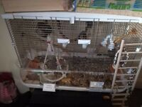 Large bird cage VSION L01 78x42x56