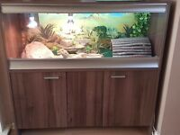 Male bearded dragon around 3 years old, beautiful vivarium & matching cupboard fully kitted out.