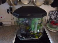 Fish Tank - 20-25 gallon .