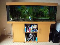 4ft juwel Rio 240 marine tropical malawi fish tank aquarium with setup leicester