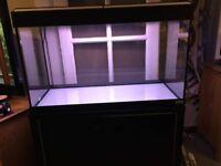 Fluval 125 fish tank