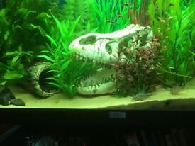 All in - Juwel Rio 125 aquarium, heater, filter, cabinet, lights and hood - 125 litres £160