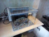 medium fish tank