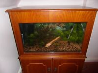 25 gallon aquarium, beech cabinet, 7 fish, new heater thermostat, filter etc to good home