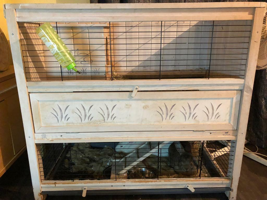 Rabbits and Cage | in Isleworth, London | Gumtree