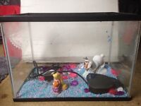 Kids room fish tank