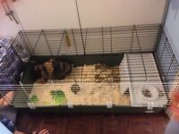indoor rabit with cage
