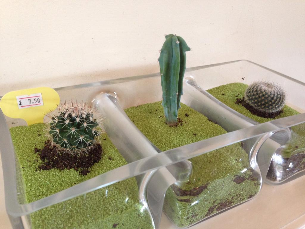 Glass cactus tryptich