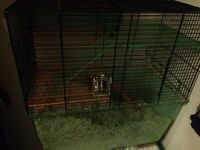 Gerbils x2 and cage and bits and bobs