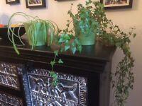Plants (not pots)