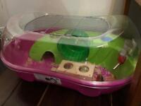 Girls hamsters