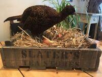 Taxidermy Interior Design Piece Hen/Pheasant