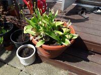3 plastic garden pots