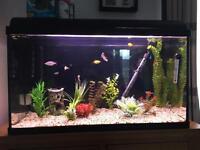 110l aquarium setup with fish