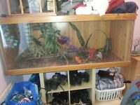 """large 5ft x 2,1""""x 2,1"""" vivarium double skinned with 3 perspex panel's at the front"""