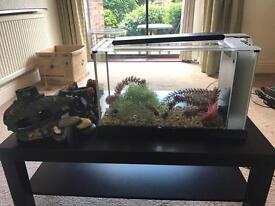 Fluval Spec LED fish tank