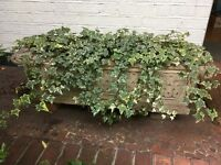 LARGE STONE PLANT TROUGH - COLLECT RICHMOND, SURREY.