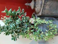 Luxury plants in a ceramic pot