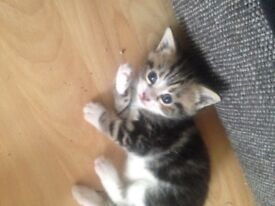 4 adorable kittens for sale!
