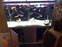 5''fish tank and 3xfitters