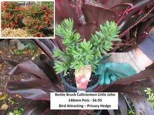 Looking for CHEAP plants - CHECK THESE OUT - All under $7 - WOW! Mudgeeraba Gold Coast South Preview