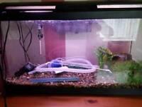 Fishtank/Aquarium