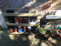 loads of garden plastic plant pots free to collector torquay