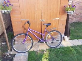 Ladies Arden Bicycle with rack