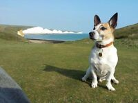 Claire's Dog Walking/Pet Services