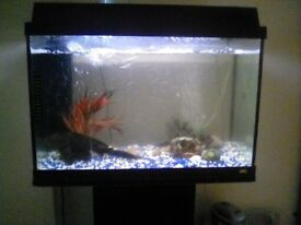 120 litre fish tank with stand pump plants filter
